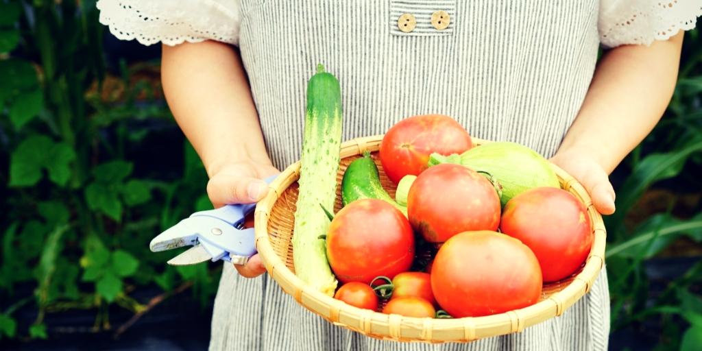 10 Beneficios De Tener Un Restaurante Con Huerto Propio